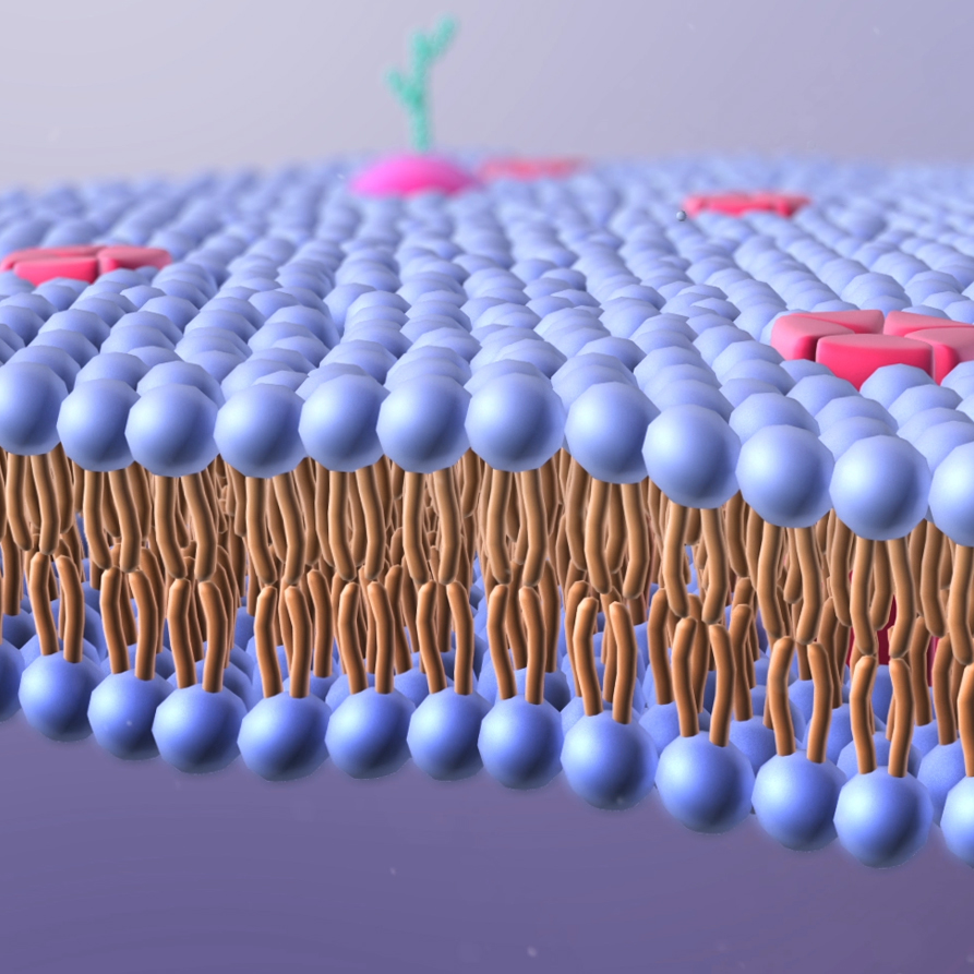 Lipid Bilayer - Ragdoll Animation
